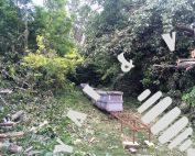 Megtisztított erdősáv - selyemfű